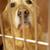 golden · retriever · perro · jaula · veterinario · cirugía - foto stock © monkey_business