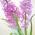 colorido · buquê · belo · rosa · jacinto · borrão - foto stock © Moravska