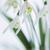 buquê · vidro · flor · primavera · folha · neve - foto stock © Moravska