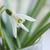 flor · borrão · folha · neve · inverno - foto stock © Moravska
