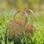 vazio · cesta · fresco · grama · verde · ao · ar · livre - foto stock © Moravska