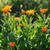belo · campo · primavera · tempo · sol - foto stock © Moravska
