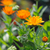 jardim · natureza · folha · verde · banho - foto stock © Moravska