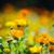 tavasz · árvíz · víz · erdő · tájkép · medence - stock fotó © moravska