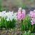 belo · jacinto · primavera · flor · grama · natureza - foto stock © Moravska