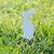páscoa · coelhos · decorações · fresco · primavera · grama - foto stock © Moravska
