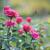 belo · jardim · flor - foto stock © moravska