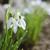 belo · branco · primavera · jardim · flor - foto stock © Moravska