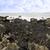 alga · praia · naturalismo · textura · fundo · areia - foto stock © morrbyte