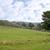 羊 · 雲 · 曇った · 青空 · 空 - ストックフォト © morrbyte