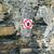 城 · カバー · 岩 · 表示 · 海藻 - ストックフォト © morrbyte
