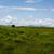 félsziget · szarvasmarha · vad · út · égbolt · fű - stock fotó © morrbyte