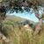 jovem · cordeiro · marrom · lã · grama · verde · páscoa - foto stock © morrbyte