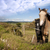 a pair of beautiful irish horses and ancient round tower stock photo © morrbyte