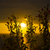 wild atlantic way sunset through wild flowers stock photo © morrbyte