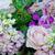 tiro · rosas · poucos · outro - foto stock © mroz