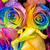 rainbow roses close up stock photo © mroz