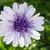 アフリカ · デイジーチェーン · 3D · 花 · 自然 · 庭園 - ストックフォト © mroz