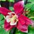 vermelho · belo · foco · turva · verde · flor - foto stock © mroz