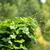 hera · legumes · fresco · natureza · fruto · jardim - foto stock © muang_satun