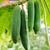 新鮮な · 栄養 · オーガニック · エキゾチック - ストックフォト © muang_satun