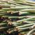 bamboo stock photo © muang_satun