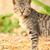 gato · belo · luz · marrom · casa · feliz - foto stock © muang_satun