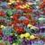 bed · Rood · Geel · Blauw · bloem - stockfoto © Musat