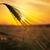 kłosie · dojrzały · pszenicy · słońce · niebo · chmury - zdjęcia stock © mycola