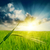 緑 · 日没 · 空 · 草 · 自然 · フィールド - ストックフォト © mycola
