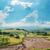 nublado · céu · seca · terra · textura · sol - foto stock © mycola