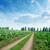rurale · strada · campi · auto - foto d'archivio © mycola