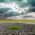 劇的な · 空 · 太陽 · 干ばつ · 地球 · テクスチャ - ストックフォト © mycola