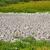 green grass around drought land stock photo © mycola