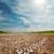aszály · föld · klímaváltozás · forró · nyár · széna - stock fotó © mycola