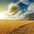 búza · drámai · égbolt · út · mező · arany - stock fotó © mycola