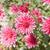 rosa · fiori · selvatico · impianto · fiore · natura - foto d'archivio © mycola