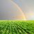 緑 · フィールド · 虹 · グレー · 空 · 春 - ストックフォト © mycola