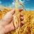 çiftçiler · el · iyi · hasat · gıda · çim - stok fotoğraf © mycola