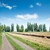 rural road near field and wood stock photo © mycola