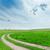 新鮮な · 緑 · 道路 · 青 · 曇った · 空 - ストックフォト © mycola