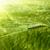 verde · cereais · primavera · imaturo · grama - foto stock © mycola