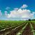 mezőgazdasági · mező · föld · föld · tavasz · kész - stock fotó © mycola
