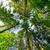 fenyőfa · hegyoldal · kék · ég · égbolt · fű · erdő - stock fotó © mycola