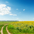 rural road in field with sunflowers and blue sky stock photo © mycola