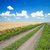 road in green field under beautiful blue sky stock photo © mycola