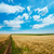 rural road under cloudy sky in golden field stock photo © mycola
