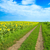 a rural road goes to horizon between two field stock photo © mycola