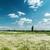 fű · kék · ég · toll · természet · égbolt · tavasz - stock fotó © mycola