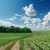 winding rural road in green field and cloudy sky over it stock photo © mycola
